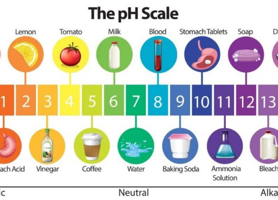 The pH Scale, as represented by common items
